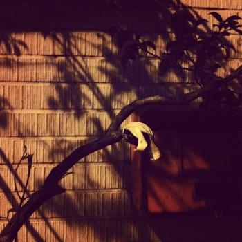 夜の木と葉