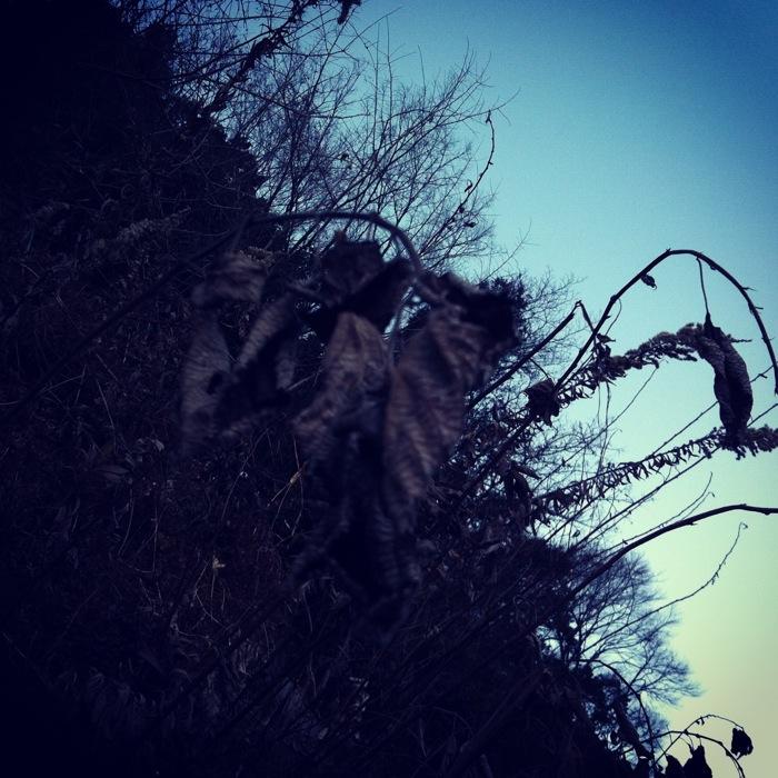 見上げる森