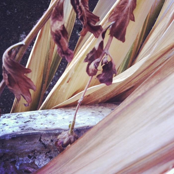 乾いた葉の線