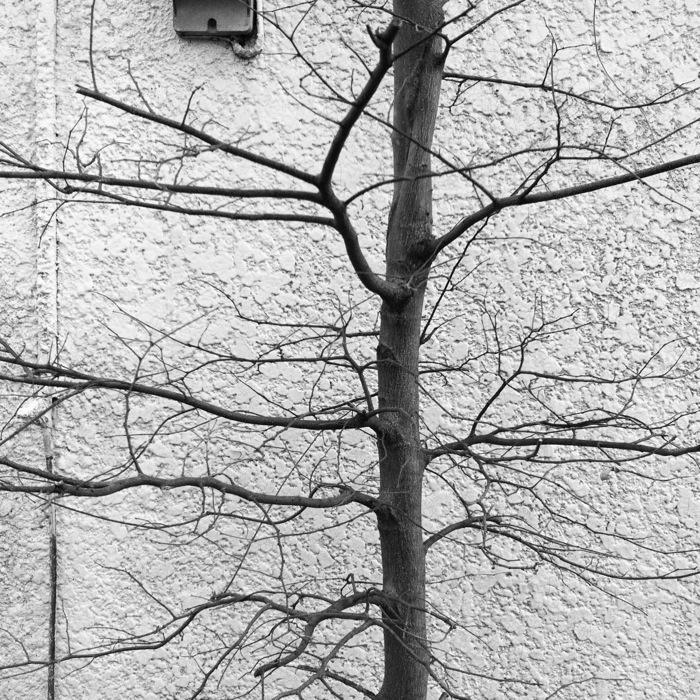 白い壁と木と