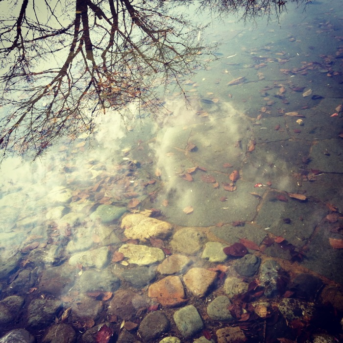 水面と空と木