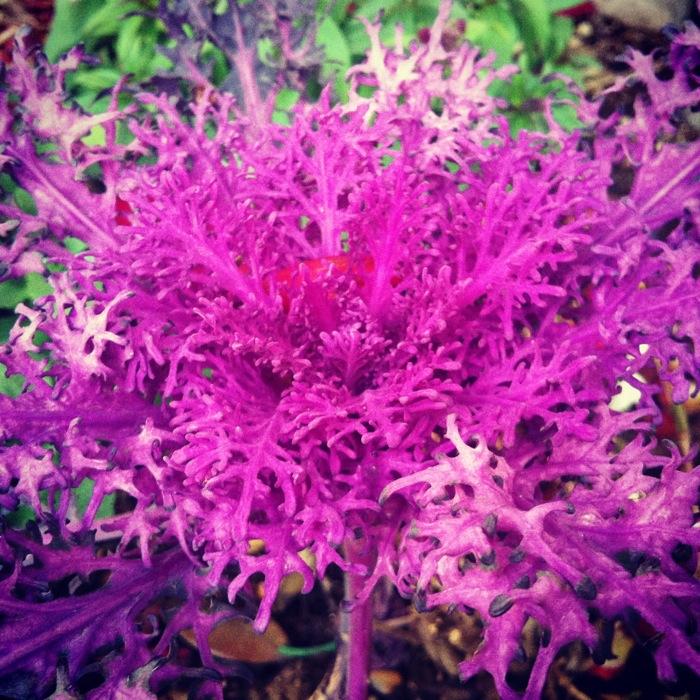 紅紫の世界