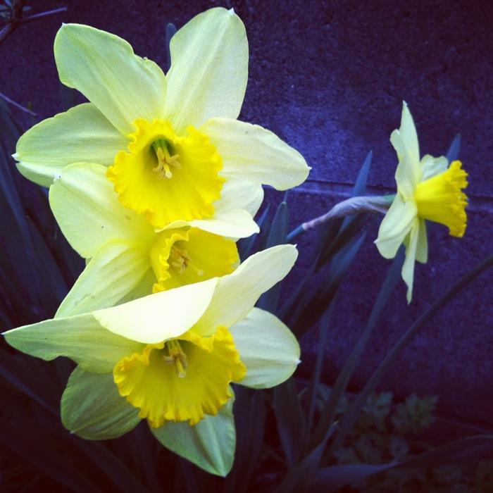 黄色い三連の花