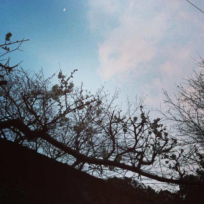 空と木 小さな月