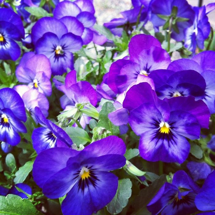 青い花たち