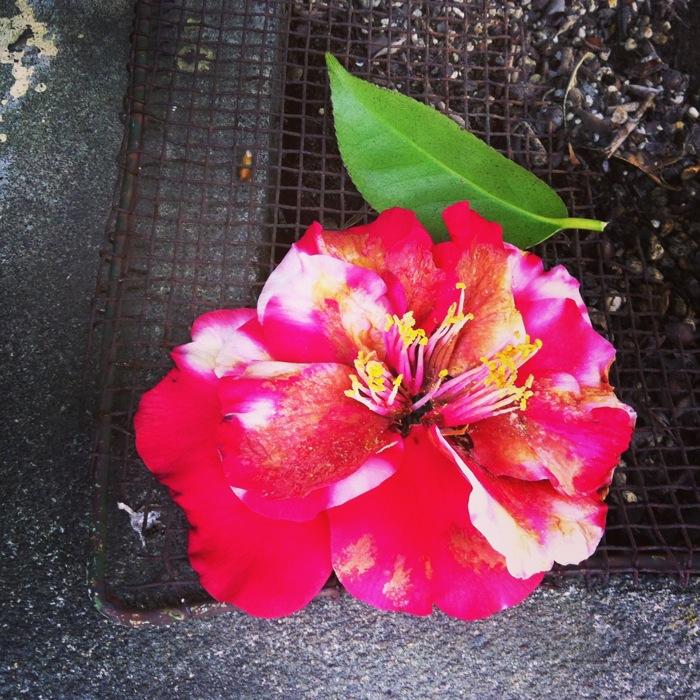 落ちた紅い花