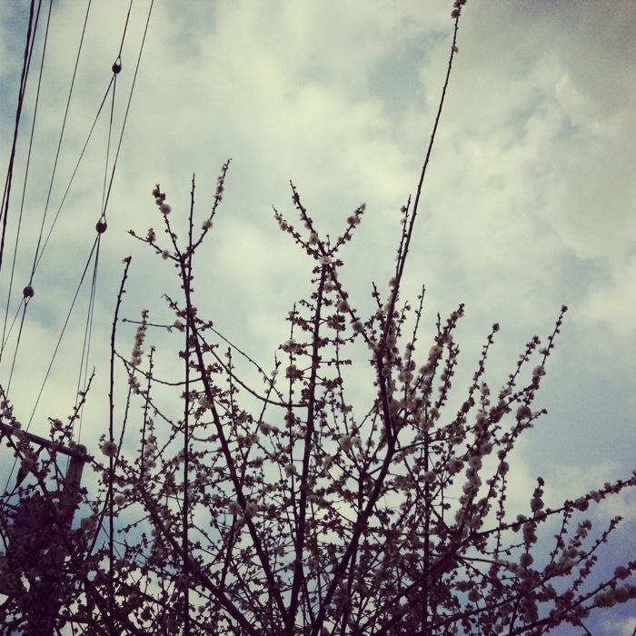 梅と春の空