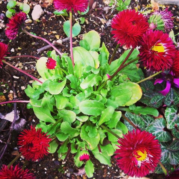 あちらこちらをむく紅い花